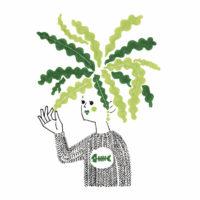 お気に入り植物フィッシュボーンカクタス